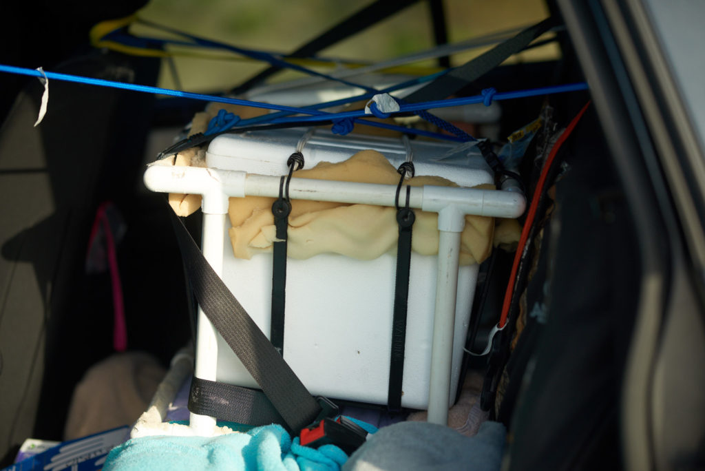Green Sea Turtle Eggs Strapped into Vehicle for Transport - Padre Island Turtle Patrol