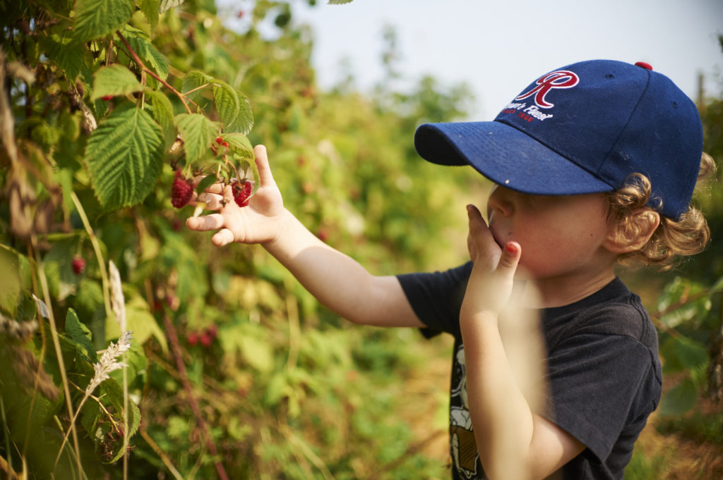 The Wonder of Children Picking Raspberries