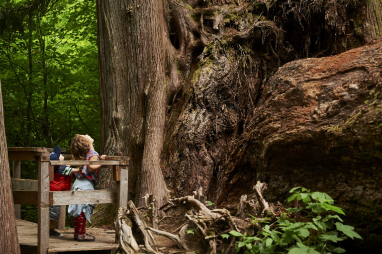 The Wonder of Children in the Grove of the Patriarchs