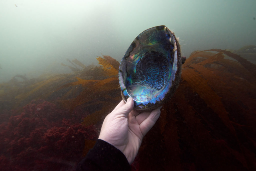 La Jolla Cove - Scuba Diving - Underwater Photography - Abolone Shell