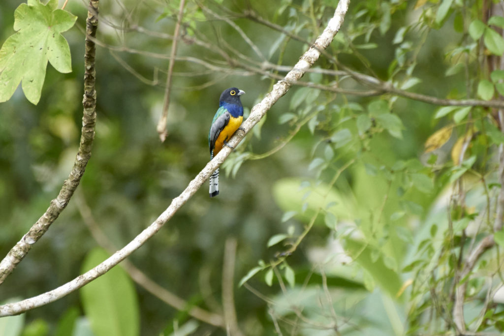 A Tanager