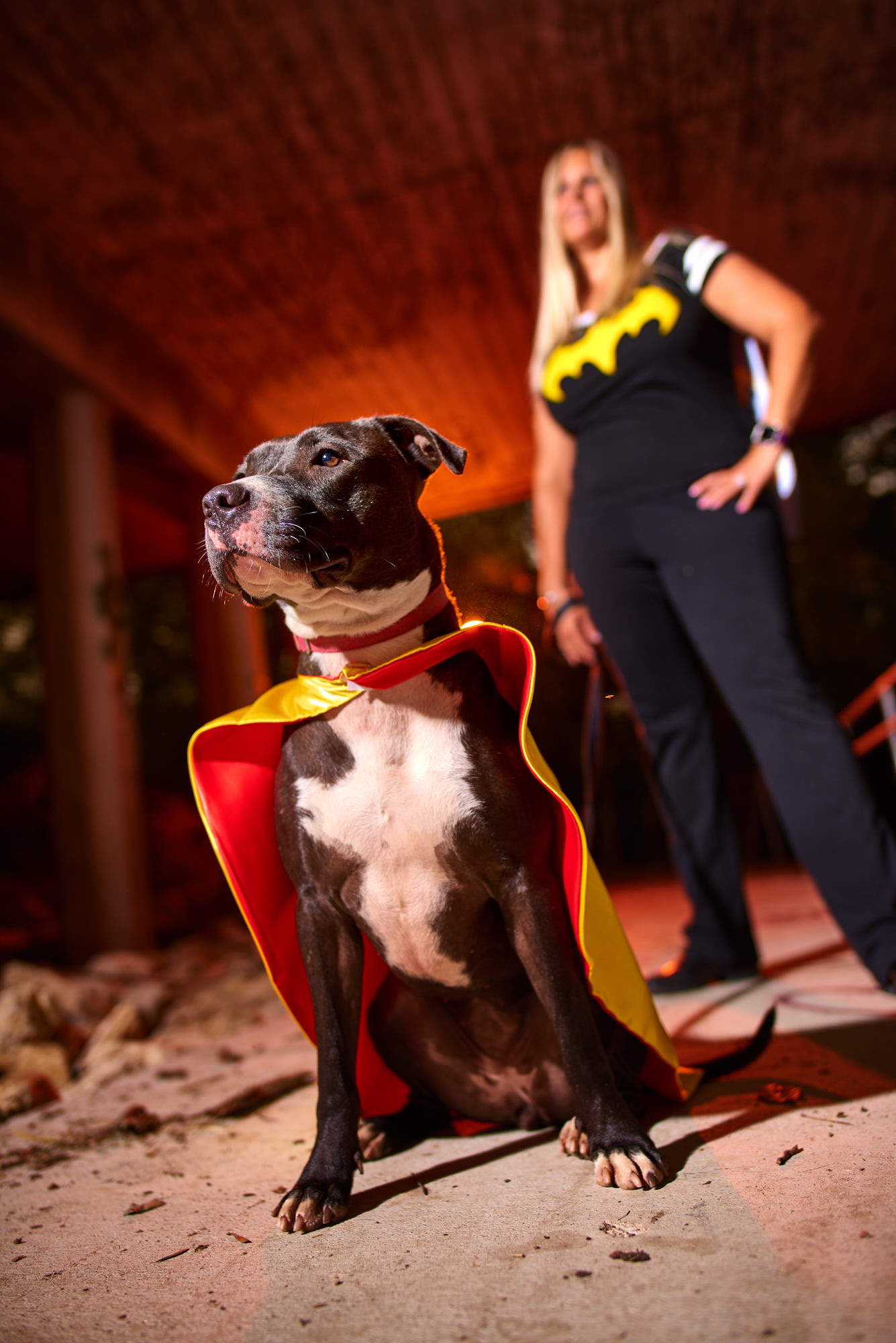Claire Bear, a super cuddly pitbull and our best animal model at the Taylor Animal Shelter needs a forever home.