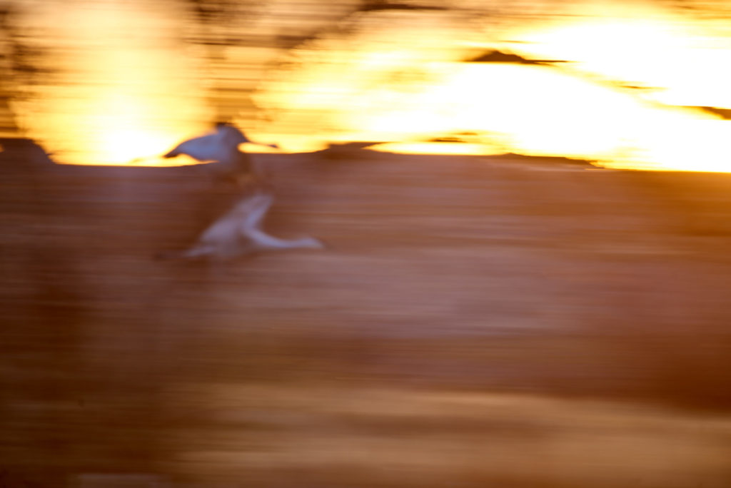 Blurry photo of bird in flight.