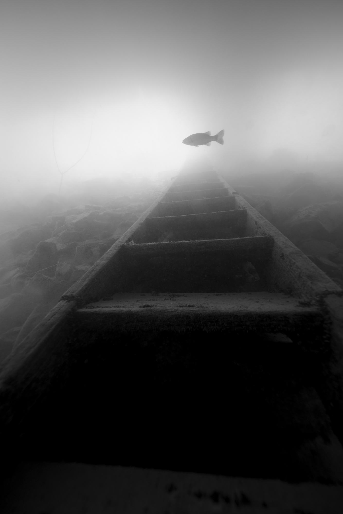 A stairway to fish.