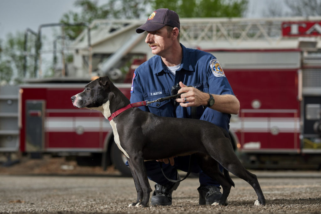 Claire pitbull with a fireman at the Taylor animal shelter.
