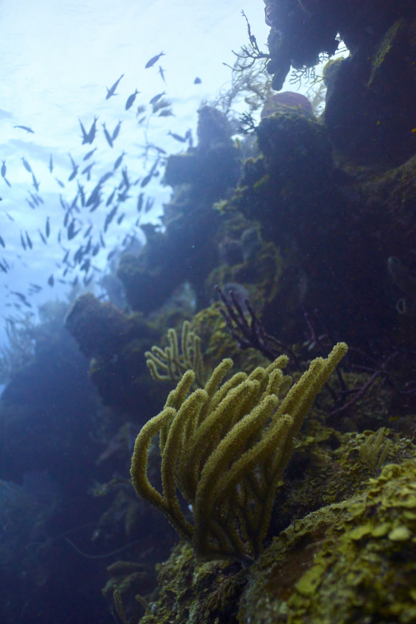 Small fish and soft coral on the reef in Belize.