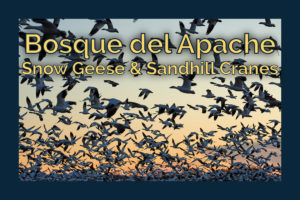 Chasing Birds at Bosque del Apache National Wildlife Refuge