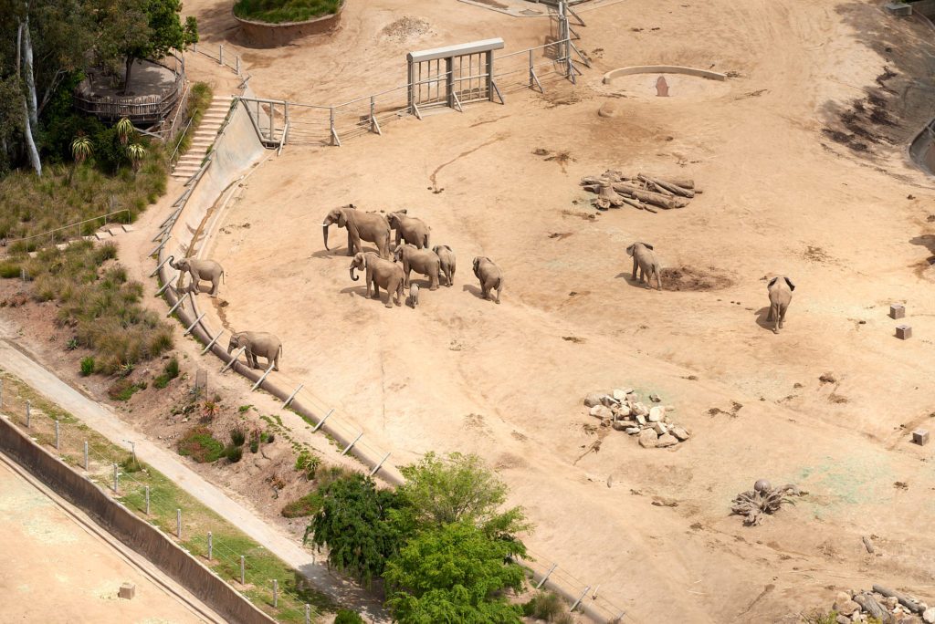 One corner of the elephant habitat at the San Diego Safari Park